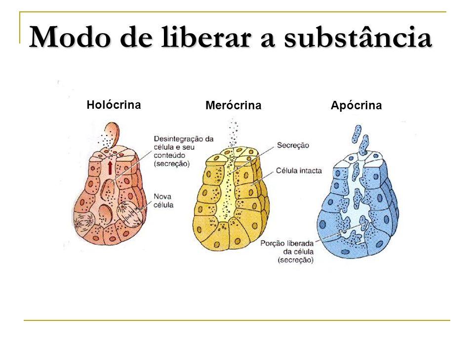 Holócrina MerócrinaApócrina Modo de liberar a substância
