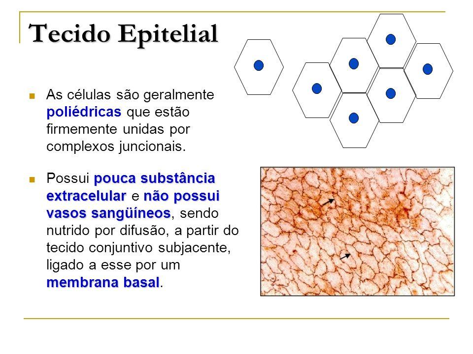 Células epiteliais Glândulas