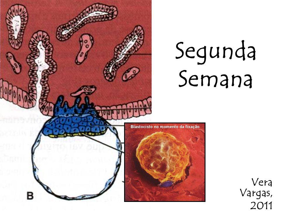 Disco Bilaminar EPIBLASTOEPIBLASTO Constituído por células colunares altas, que estão voltadas para a cavidade amniótica HIPOBLASTOHIPOBLASTO Células cubóides junto à cavidade blastocística (exocelômica).Células cubóides junto à cavidade blastocística (exocelômica).
