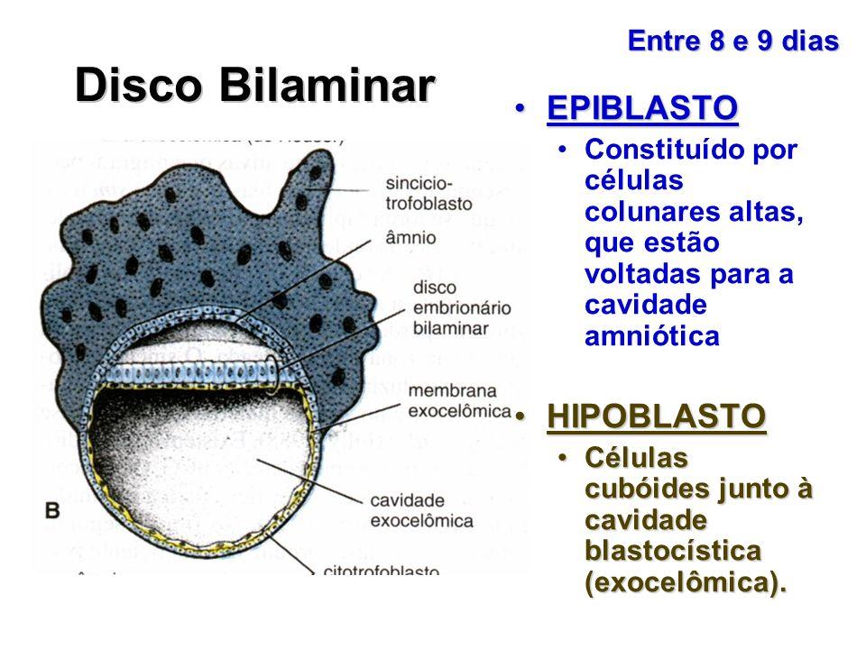 Disco Bilaminar EPIBLASTOEPIBLASTO Constituído por células colunares altas, que estão voltadas para a cavidade amniótica HIPOBLASTOHIPOBLASTO Células