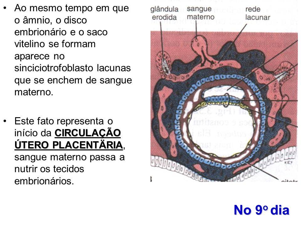 No 9 o dia Ao mesmo tempo em que o âmnio, o disco embrionário e o saco vitelino se formam aparece no sinciciotrofoblasto lacunas que se enchem de sang