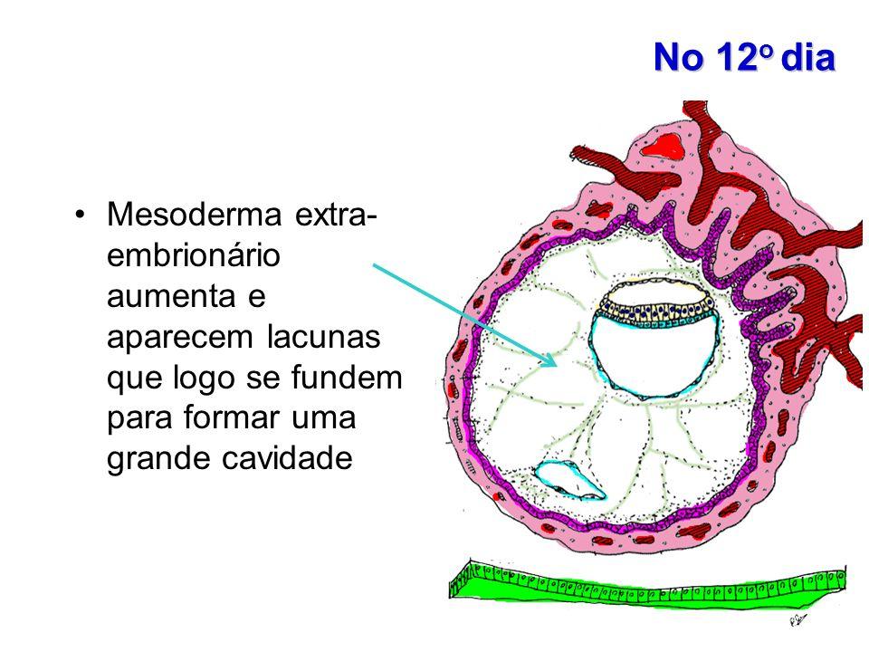 No 12 o dia Mesoderma extra- embrionário aumenta e aparecem lacunas que logo se fundem para formar uma grande cavidade