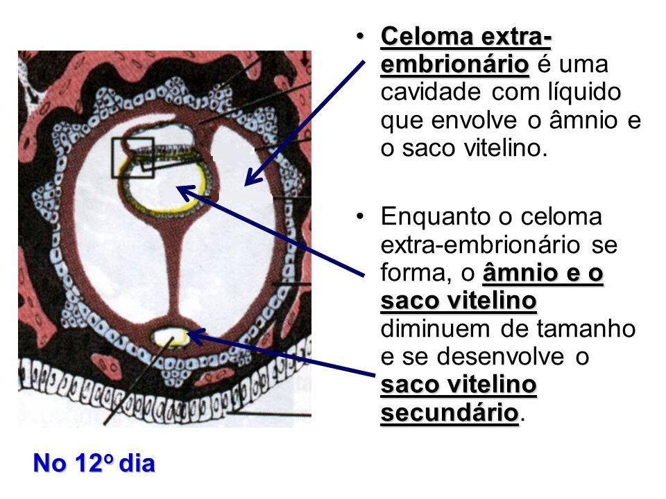 Celoma extra- embrionárioCeloma extra- embrionário é uma cavidade com líquido que envolve o âmnio e o saco vitelino. âmnio e o saco vitelino saco vite