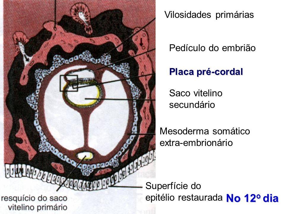 Vilosidades primárias Pedículo do embrião Placa pré-cordal Saco vitelino secundário Mesoderma somático extra-embrionário Superfície do epitélio restau
