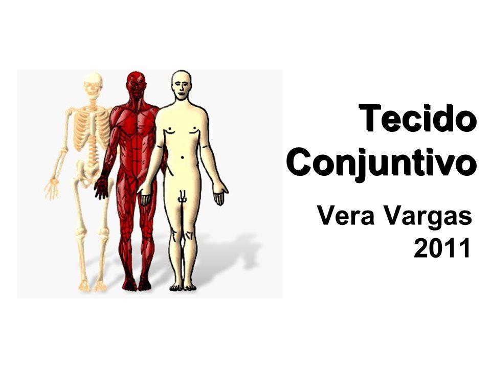 Tecido Conjuntivo Vera Vargas 2011