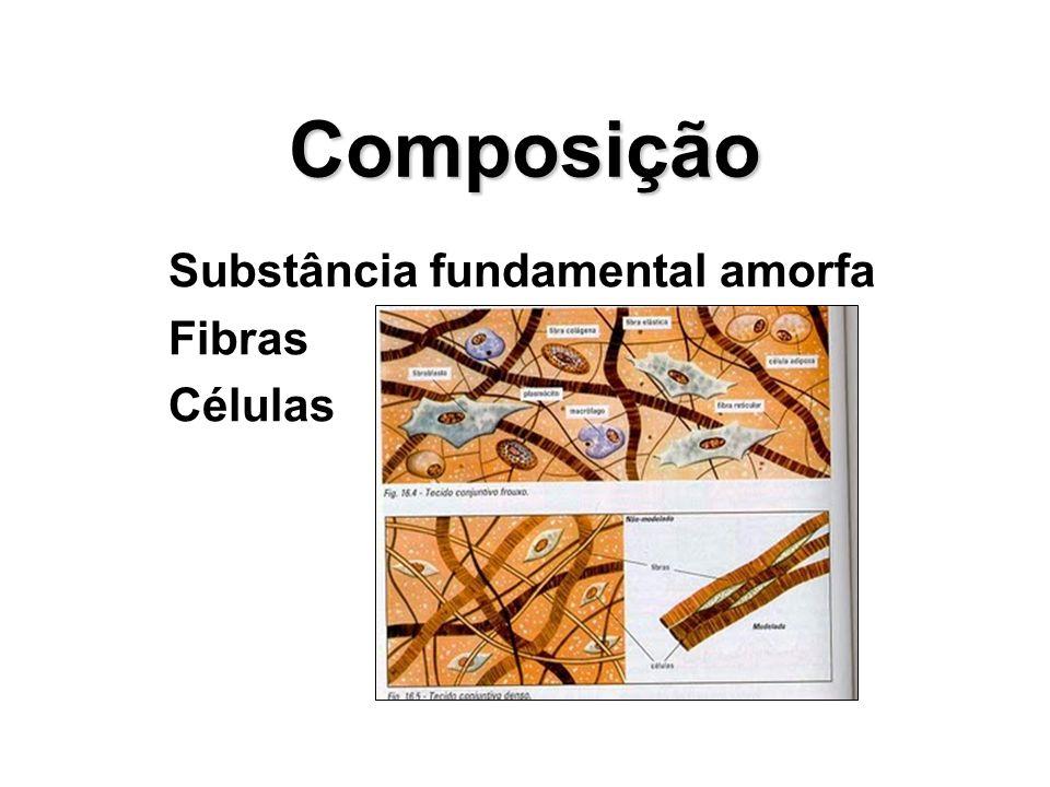 Composição Substância fundamental amorfa Fibras Células