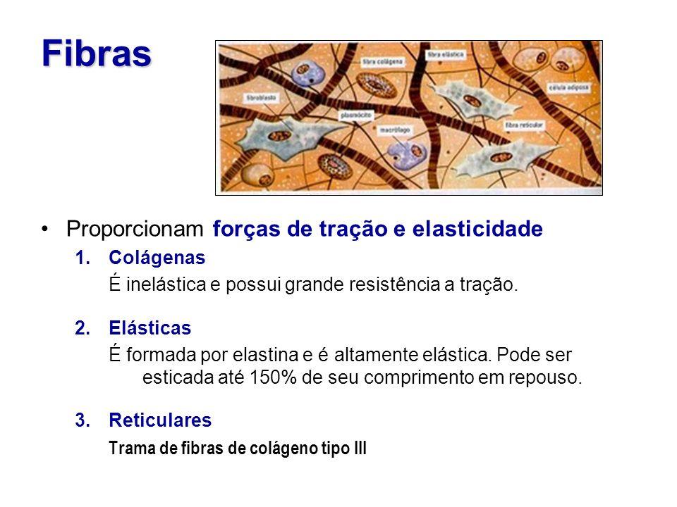 Fibras Proporcionam forças de tração e elasticidade 1.Colágenas É inelástica e possui grande resistência a tração.