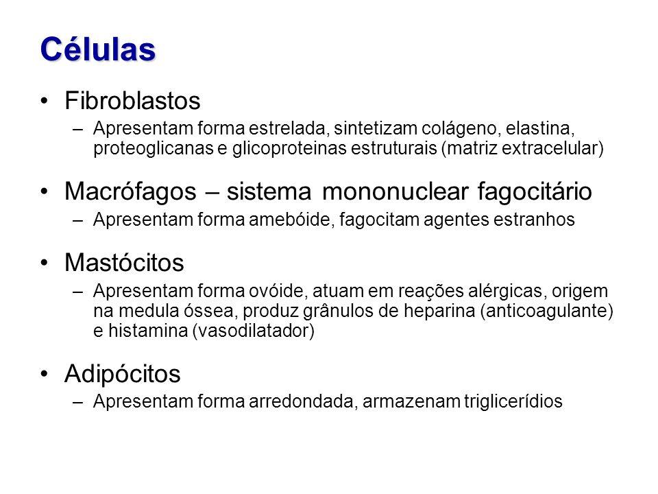 Células Fibroblastos –Apresentam forma estrelada, sintetizam colágeno, elastina, proteoglicanas e glicoproteinas estruturais (matriz extracelular) Macrófagos – sistema mononuclear fagocitário –Apresentam forma amebóide, fagocitam agentes estranhos Mastócitos –Apresentam forma ovóide, atuam em reações alérgicas, origem na medula óssea, produz grânulos de heparina (anticoagulante) e histamina (vasodilatador) Adipócitos –Apresentam forma arredondada, armazenam triglicerídios