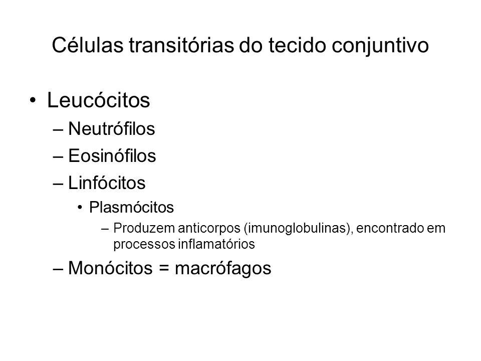 Células transitórias do tecido conjuntivo Leucócitos –Neutrófilos –Eosinófilos –Linfócitos Plasmócitos –Produzem anticorpos (imunoglobulinas), encontrado em processos inflamatórios –Monócitos = macrófagos