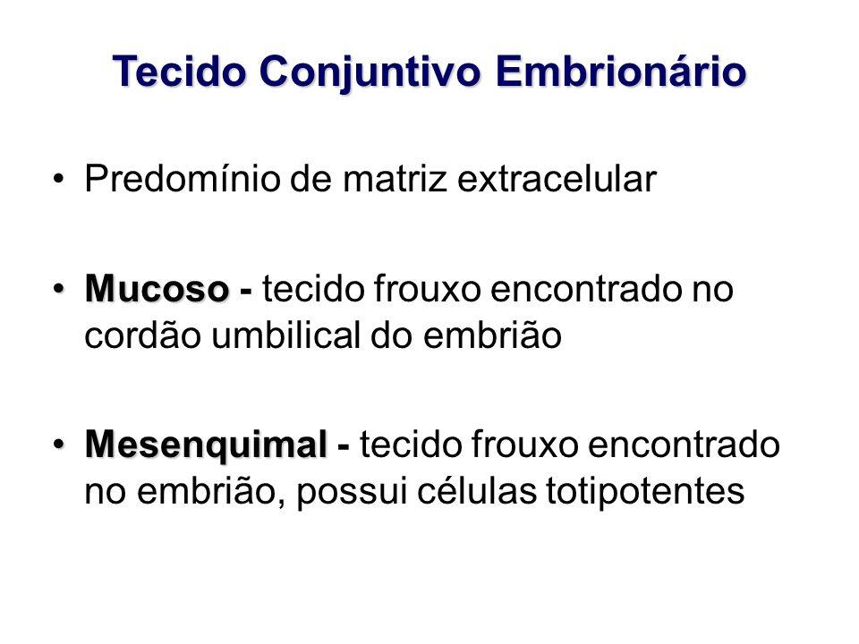 Tecido Conjuntivo Embrionário Predomínio de matriz extracelular MucosoMucoso - tecido frouxo encontrado no cordão umbilical do embrião MesenquimalMesenquimal - tecido frouxo encontrado no embrião, possui células totipotentes
