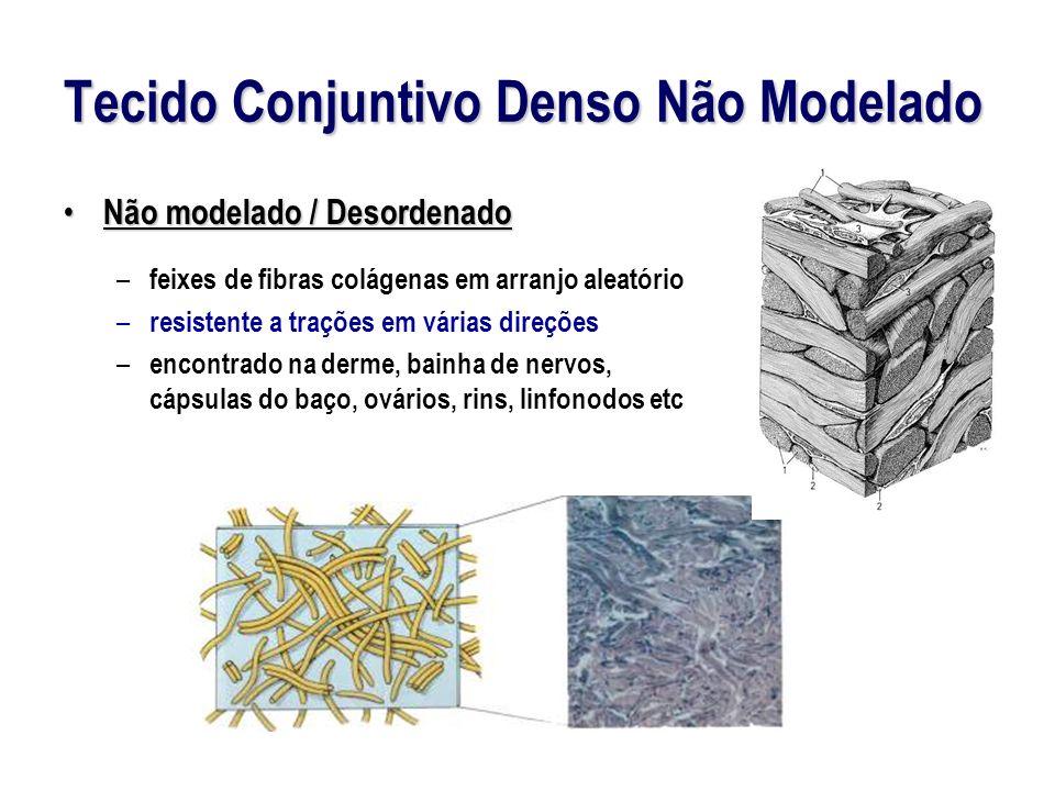 Tecido Conjuntivo Denso Não Modelado Não modelado / Desordenado Não modelado / Desordenado – feixes de fibras colágenas em arranjo aleatório – resistente a trações em várias direções – encontrado na derme, bainha de nervos, cápsulas do baço, ovários, rins, linfonodos etc
