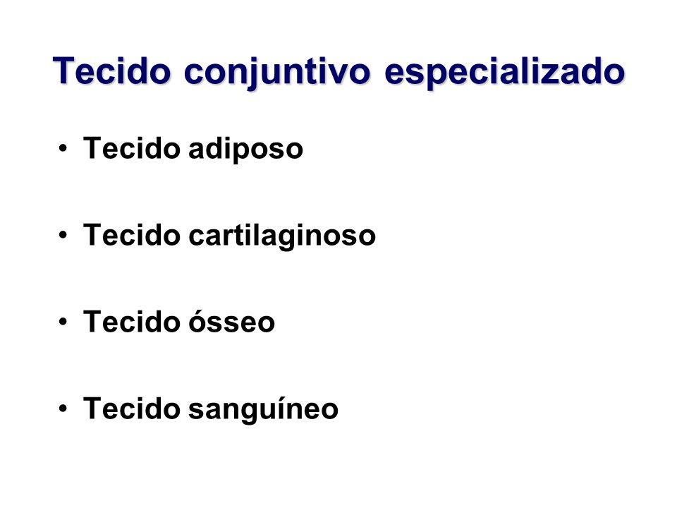 Tecido conjuntivo especializado Tecido adiposo Tecido cartilaginoso Tecido ósseo Tecido sanguíneo