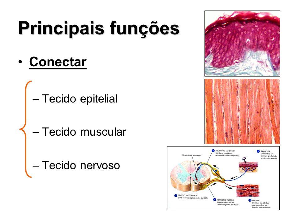 Principais funções Conectar –Tecido epitelial –Tecido muscular –Tecido nervoso