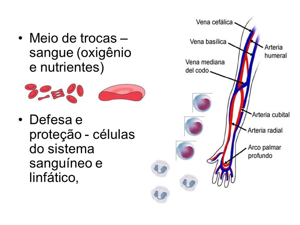 Meio de trocas – sangue (oxigênio e nutrientes) Defesa e proteção - células do sistema sanguíneo e linfático,