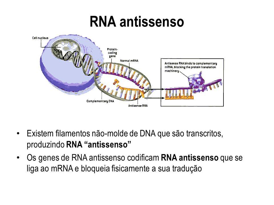 RNA antissenso Existem filamentos não-molde de DNA que são transcritos, produzindo RNA antissenso Os genes de RNA antissenso codificam RNA antissenso