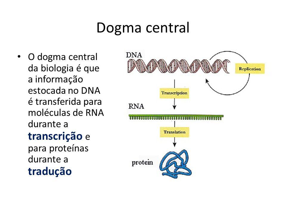 Dogma central O dogma central da biologia é que a informação estocada no DNA é transferida para moléculas de RNA durante a transcrição e para proteína