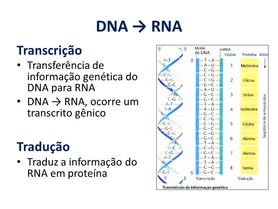 DNA RNA Transcrição Transferência de informação genética do DNA para RNA DNA RNA, ocorre um transcrito gênico Tradução Traduz a informação do RNA em p