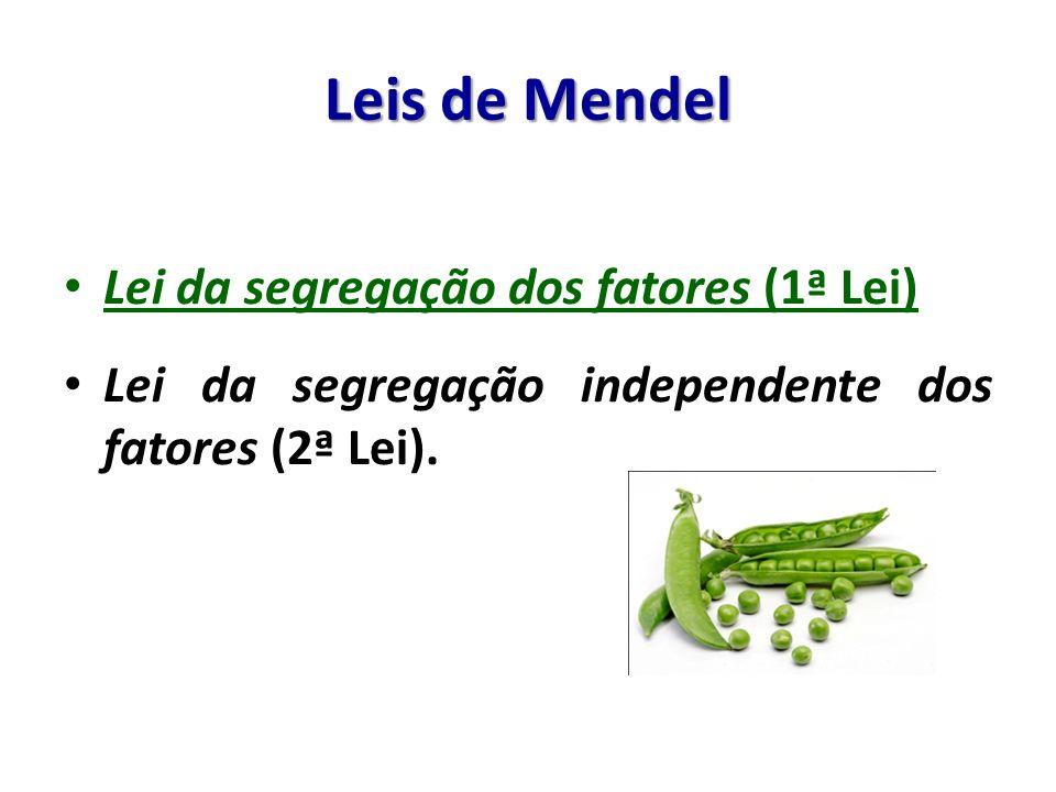 Lei da segregação dos fatores (1ª Lei) Lei da segregação independente dos fatores (2ª Lei).