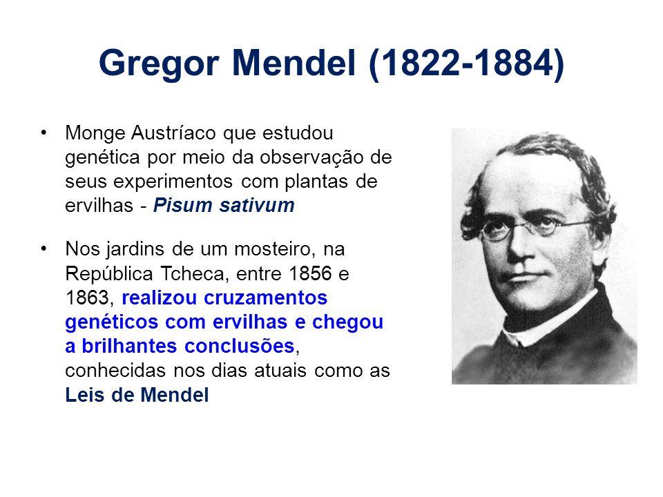 Gregor Mendel (1822-1884) Monge Austríaco que estudou genética por meio da observação de seus experimentos com plantas de ervilhas - Pisum sativum Nos