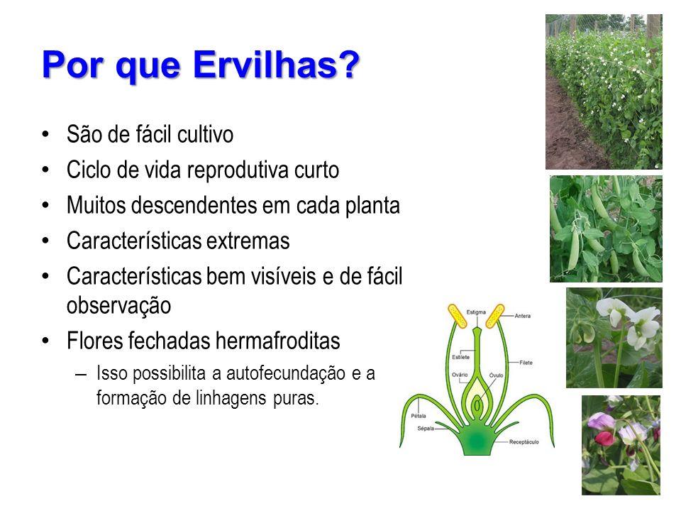 São de fácil cultivo Ciclo de vida reprodutiva curto Muitos descendentes em cada planta Características extremas Características bem visíveis e de fác