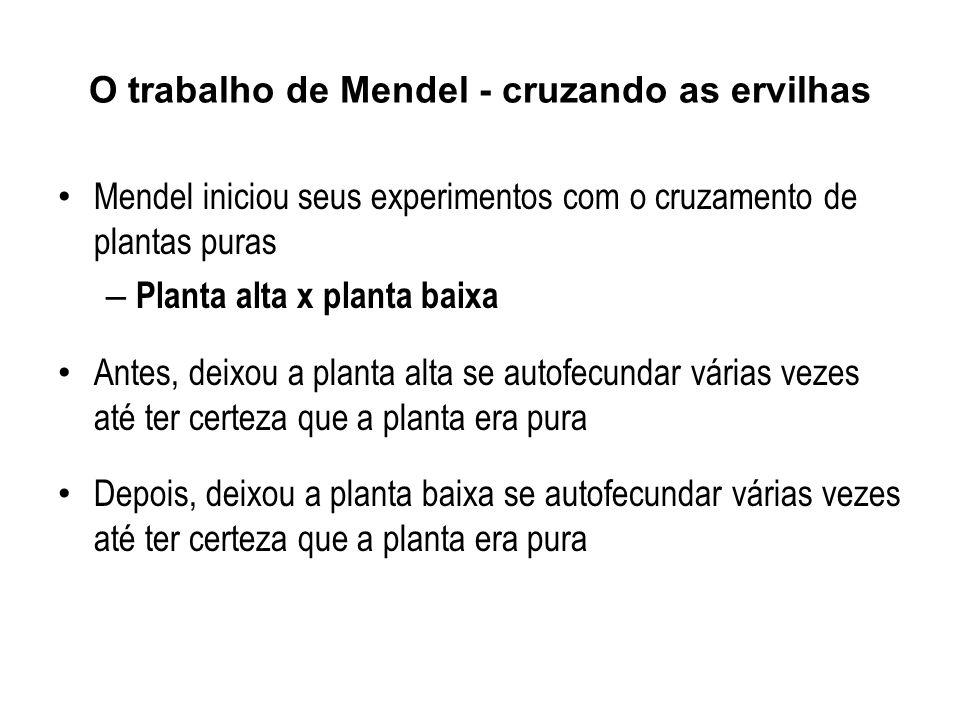 Mendel iniciou seus experimentos com o cruzamento de plantas puras – Planta alta x planta baixa Antes, deixou a planta alta se autofecundar várias vezes até ter certeza que a planta era pura Depois, deixou a planta baixa se autofecundar várias vezes até ter certeza que a planta era pura O trabalho de Mendel - cruzando as ervilhas