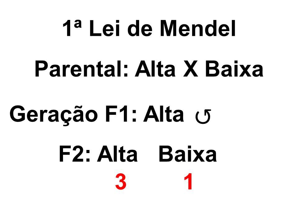 1ª Lei de Mendel 31 Parental: Alta X Baixa Geração F1: Alta F2: Alta Baixa