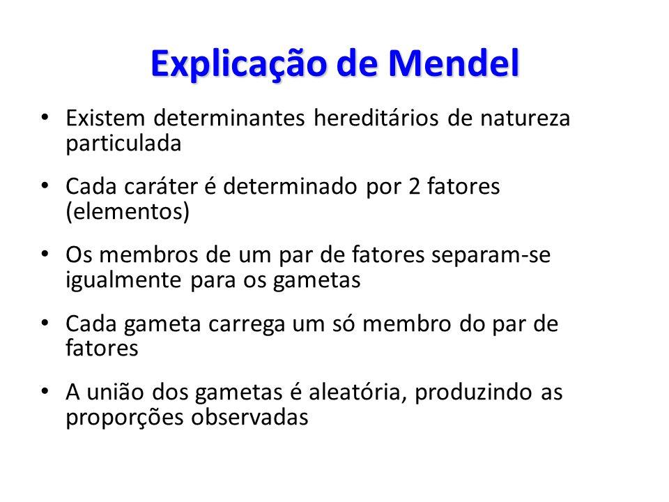 Explicação de Mendel Existem determinantes hereditários de natureza particulada Cada caráter é determinado por 2 fatores (elementos) Os membros de um par de fatores separam-se igualmente para os gametas Cada gameta carrega um só membro do par de fatores A união dos gametas é aleatória, produzindo as proporções observadas