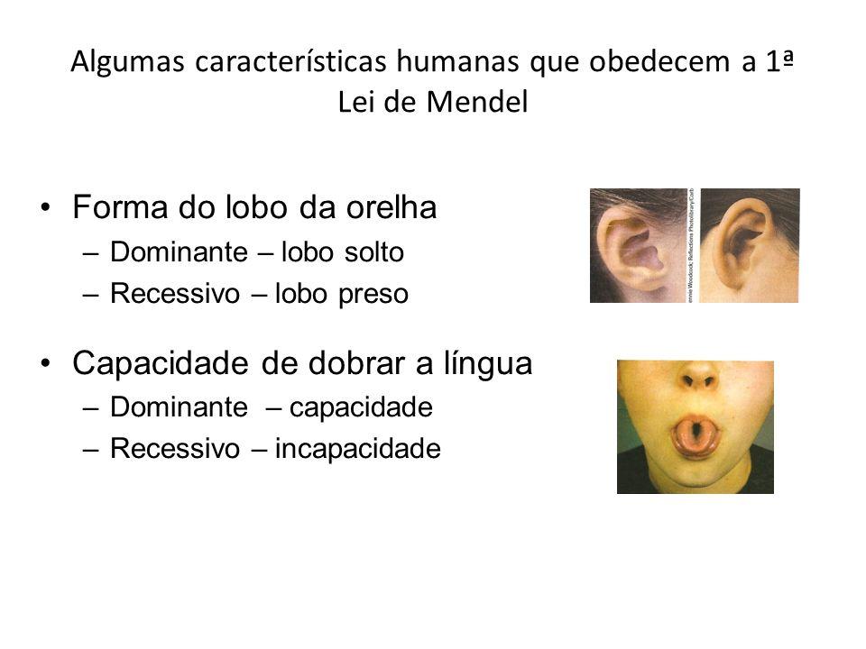 Algumas características humanas que obedecem a 1ª Lei de Mendel Forma do lobo da orelha –Dominante – lobo solto –Recessivo – lobo preso Capacidade de