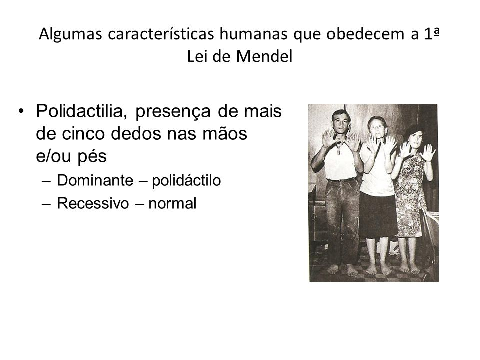 Algumas características humanas que obedecem a 1ª Lei de Mendel Polidactilia, presença de mais de cinco dedos nas mãos e/ou pés –Dominante – polidáctilo –Recessivo – normal