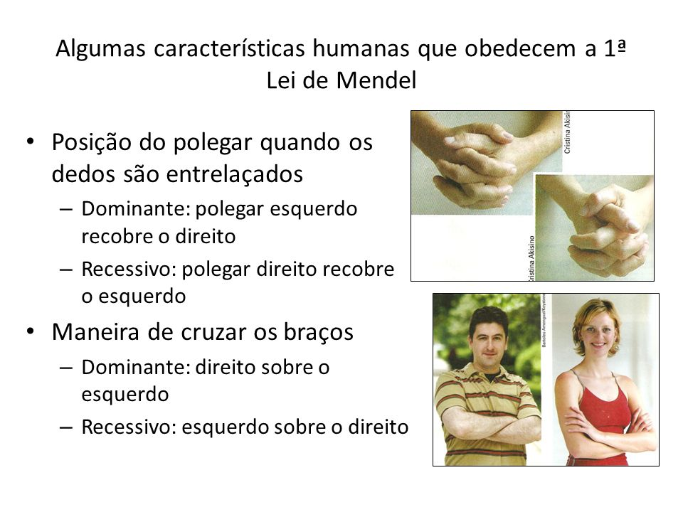 Algumas características humanas que obedecem a 1ª Lei de Mendel Posição do polegar quando os dedos são entrelaçados – Dominante: polegar esquerdo recobre o direito – Recessivo: polegar direito recobre o esquerdo Maneira de cruzar os braços – Dominante: direito sobre o esquerdo – Recessivo: esquerdo sobre o direito