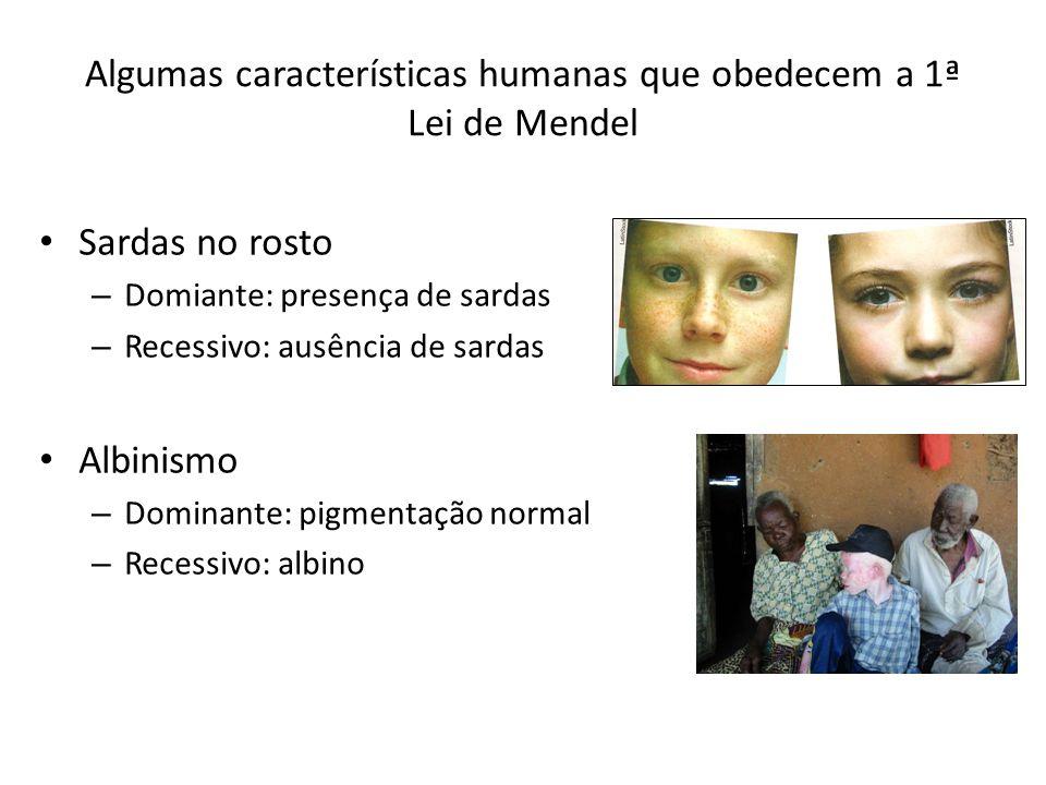 Algumas características humanas que obedecem a 1ª Lei de Mendel Sardas no rosto – Domiante: presença de sardas – Recessivo: ausência de sardas Albinismo – Dominante: pigmentação normal – Recessivo: albino