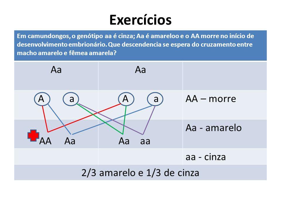 Exercícios Em camundongos, o genótipo aa é cinza; Aa é amareloo e o AA morre no início de desenvolvimento embrionário. Que descendencia se espera do c