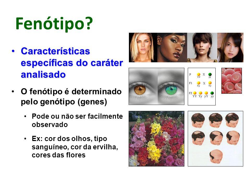 Fenótipo? Características específicas do caráter analisadoCaracterísticas específicas do caráter analisado O fenótipo é determinado pelo genótipo (gen