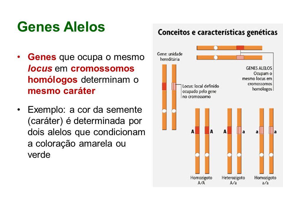 Genes Alelos Genes que ocupa o mesmo locus em cromossomos homólogos determinam o mesmo caráter Exemplo: a cor da semente (caráter) é determinada por dois alelos que condicionam a coloração amarela ou verde