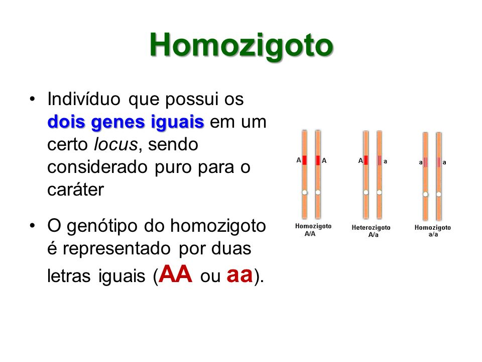 Homozigoto dois genes iguaisIndivíduo que possui os dois genes iguais em um certo locus, sendo considerado puro para o caráter O genótipo do homozigot