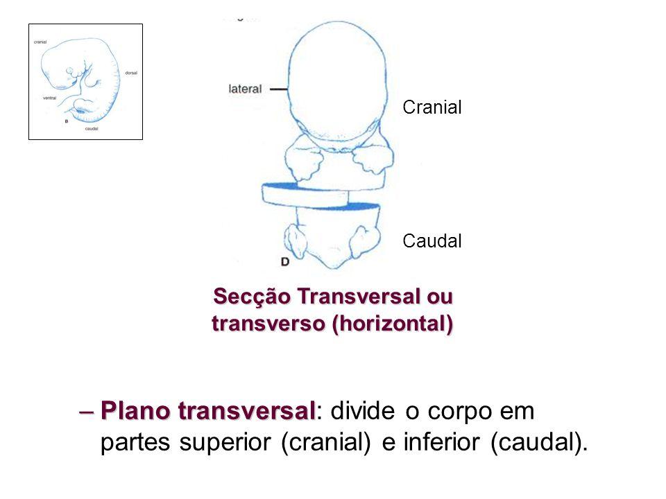 –Plano transversal –Plano transversal: divide o corpo em partes superior (cranial) e inferior (caudal). Secção Transversal ou transverso (horizontal)