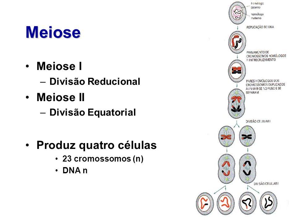 Meiose Meiose I –Divisão Reducional Meiose II –Divisão Equatorial Produz quatro células 23 cromossomos (n) DNA n