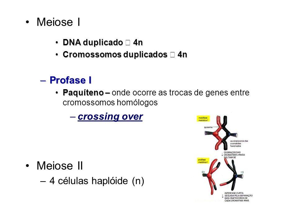 Meiose I DNA duplicado 4nDNA duplicado 4n Cromossomos duplicados 4nCromossomos duplicados 4n –Profase I Paquíteno –Paquíteno – onde ocorre as trocas d