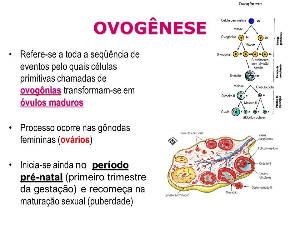 OVOGÊNESE ovogônias óvulos madurosRefere-se a toda a seqüência de eventos pelo quais células primitivas chamadas de ovogônias transformam-se em óvulos