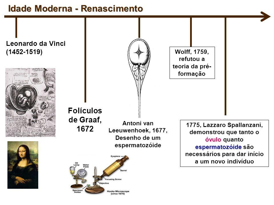 Leonardo da Vinci (1452-1519) Antoni van Leeuwenhoek, 1677, Desenho de um espermatozóide óvulo espermatozóide 1775, Lazzaro Spallanzani, demonstrou qu