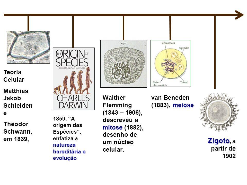 natureza hereditária e evolução 1859, A origem das Espécies, enfatiza a natureza hereditária e evolução mitose Walther Flemming (1843 – 1906), descrev