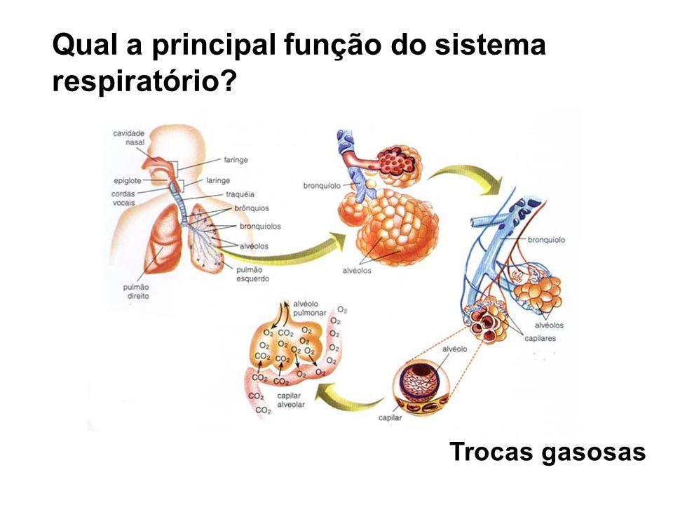 Qual a principal função do sistema respiratório? Trocas gasosas