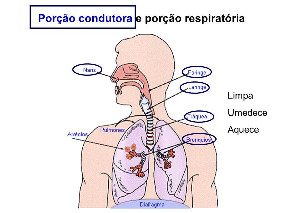 Porção condutora e porção respiratória Limpa Umedece Aquece