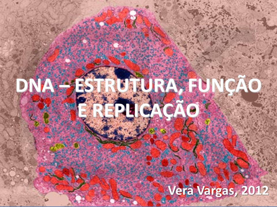 Vera Vargas, 2012 DNA – ESTRUTURA, FUNÇÃO E REPLICAÇÃO