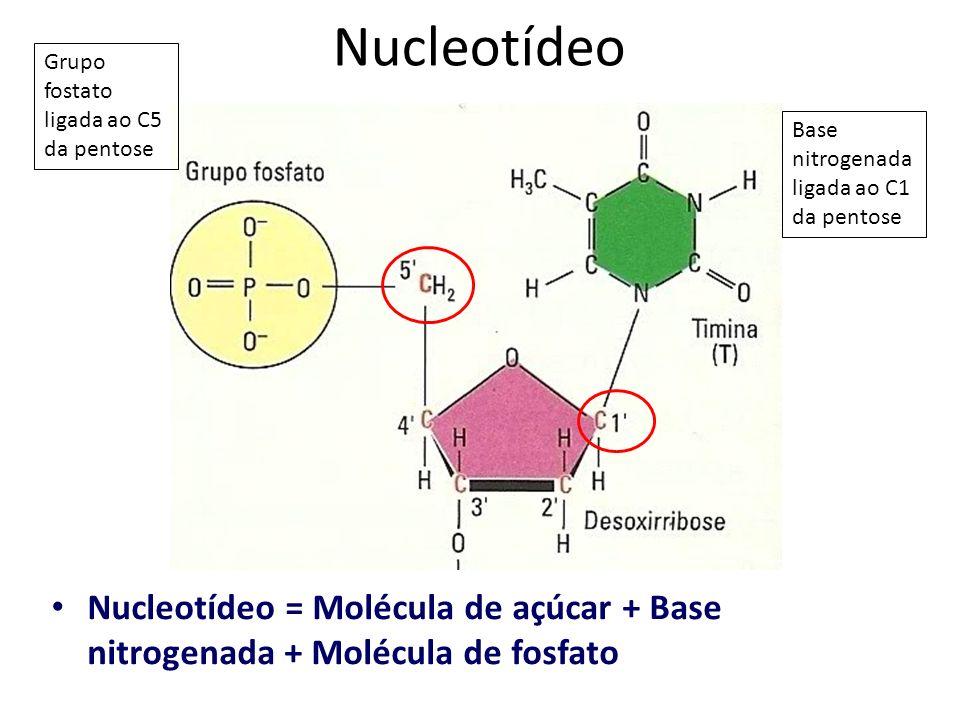 Nucleotídeo = Molécula de açúcar + Base nitrogenada + Molécula de fosfato Base nitrogenada ligada ao C1 da pentose Grupo fostato ligada ao C5 da pento