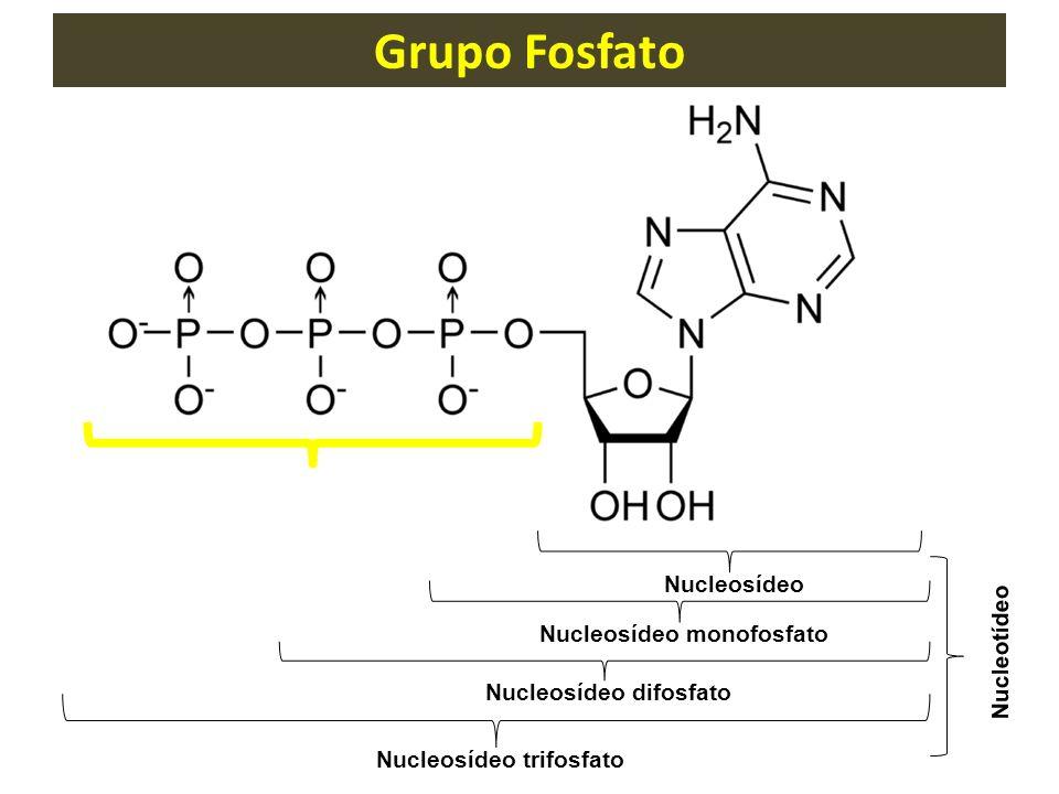 Grupo Fosfato Nucleosídeo Nucleosídeo monofosfato Nucleosídeo difosfato Nucleosídeo trifosfato Nucleotídeo