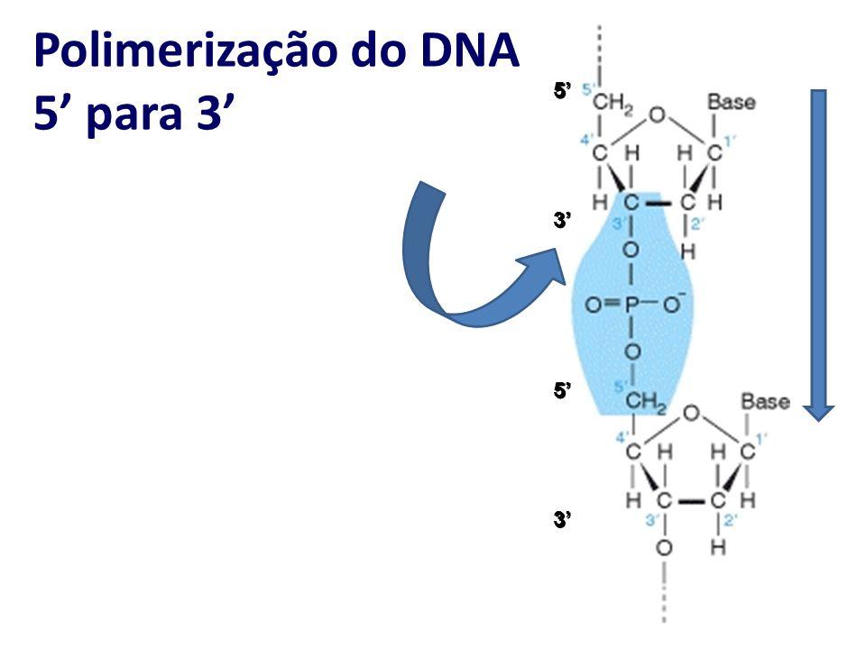 Polimerização do DNA 5 para 3 3 5 3 5