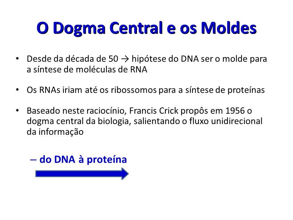 O Dogma Central e os Moldes Desde da década de 50 hipótese do DNA ser o molde para a síntese de moléculas de RNA Os RNAs iriam até os ribossomos para
