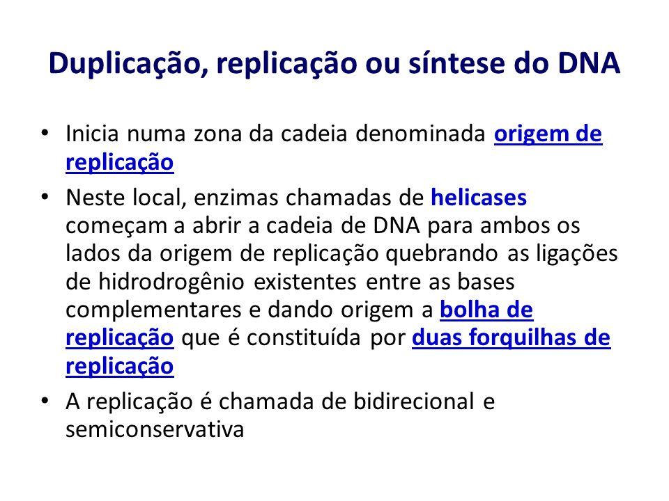 Duplicação, replicação ou síntese do DNA Inicia numa zona da cadeia denominada origem de replicação Neste local, enzimas chamadas de helicases começam