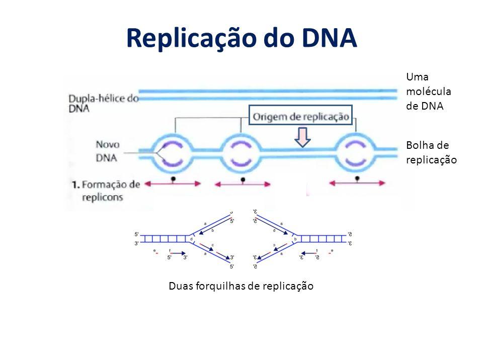 Replicação do DNA Duas forquilhas de replicação Uma molécula de DNA Bolha de replicação